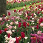 Bloembollen planten 3