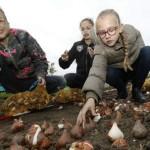 Bloembollen planten Almere