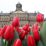 tulpen-in-koninklijk-paleis