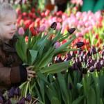 Gratis tulpen in Amsterdam