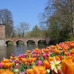 Kleurrijke bloemententoonstelling op kasteel Groot-Bijgaarden