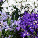 Iris Alaska, Shanghai en Hong Kong