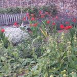 crocosmia in combinatie vaste planten