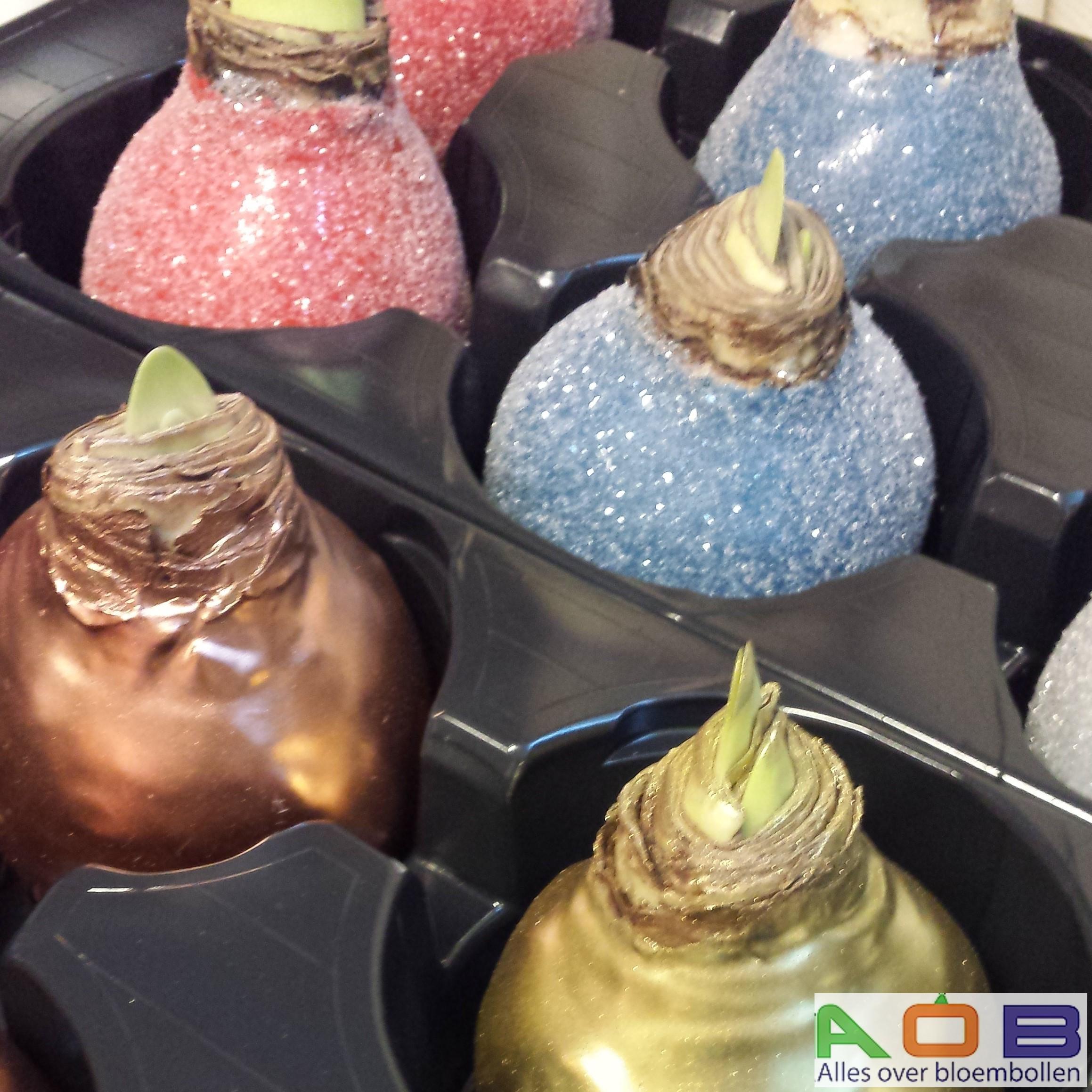 Amaryllis in wax