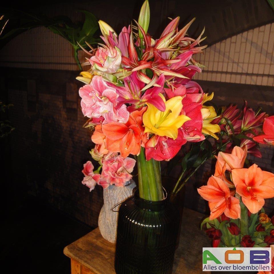 Amaryllis bloemsierkunst