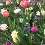 Border met tulp en hyacint close up