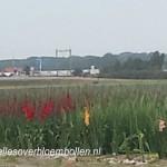 Gladiolen veld