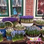 Iris reticulata en diverse soorten muscari in pot