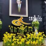 Narcis Thailand