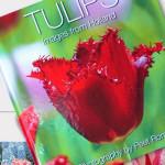 Nieuw fotoboek tulpen
