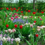 inspiratie met bloembollen