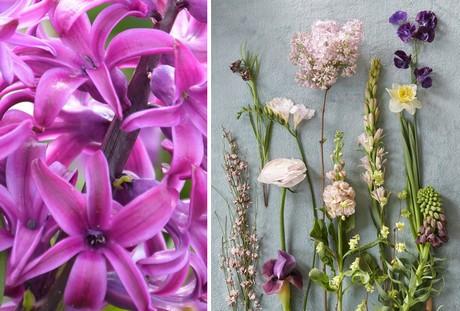 Hyacint ruikt het lekkerst