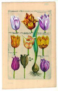 bollencatalogus-emmanuel-sweerts-museum-de-zwarte-tulp-lisse-191x300