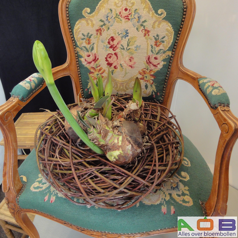 Bloemstuk stoel met krans Amaryllis